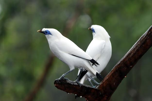 Close de pássaros brancos em um galho com fundo desfocado