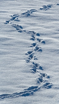 Close de pegadas de animais na neve
