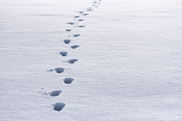 Close de pegadas humanas na neve fresca