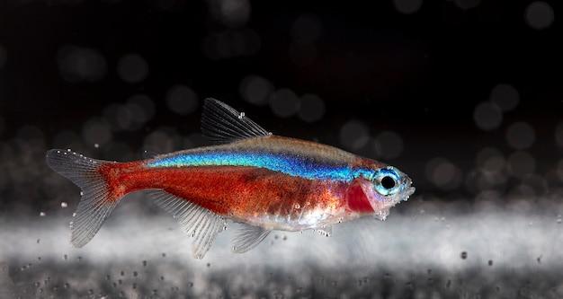 Close de peixes de aquário