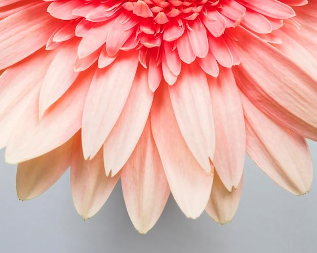 Close de pétalas de flores