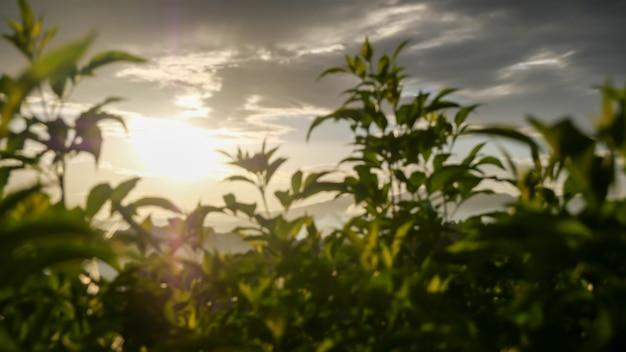 Close de plantas verdes frescas com luz do sol ao anoitecer