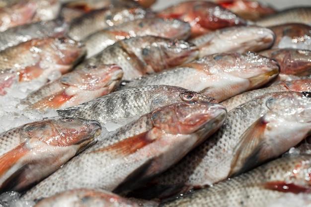 Close de tilápia fresca a granel no gelo no mercado de peixes