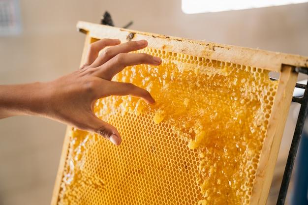 Close de um apicultor segurando um favo de mel cheio de abelhas