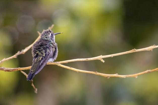 Close de um beija-flor empoleirado em um galho de árvore