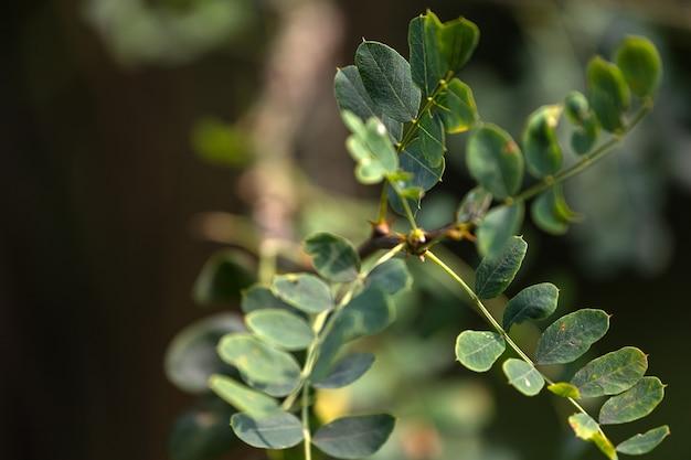 Close de um belo galho de arbusto fresco com folhas verdes e amarelas claras