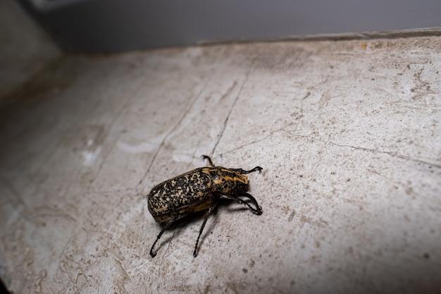 Close de um besouro no chão