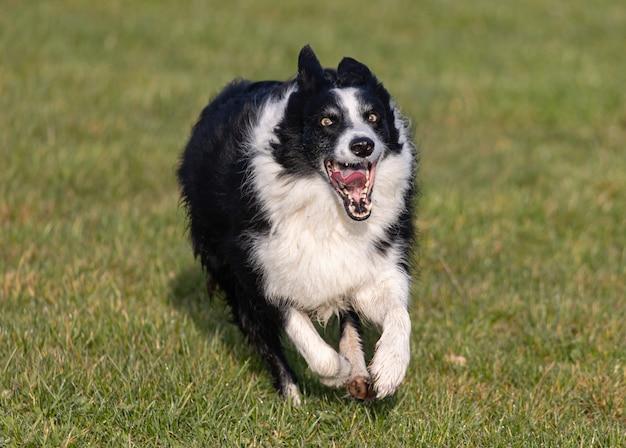 Close de um cachorro correndo no jardim
