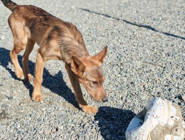 Close de um cachorro de rua olhando para uma bola de futebol danificada em um solo de cascalho