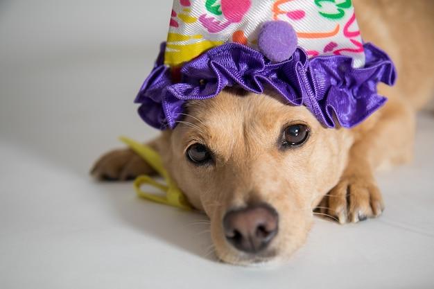 Close de um cachorro fofo com um chapéu de aniversário olhando para a câmera