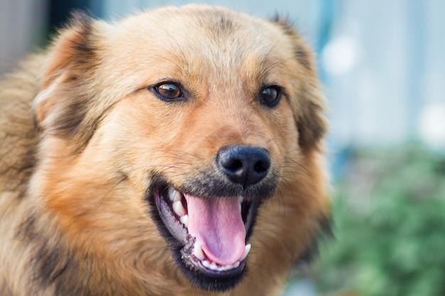 Close de um cachorro marrom em um fundo desfocado