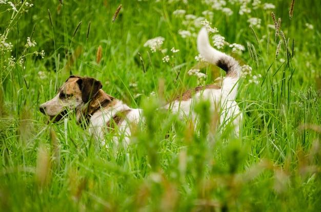 Close de um cachorro no jardim