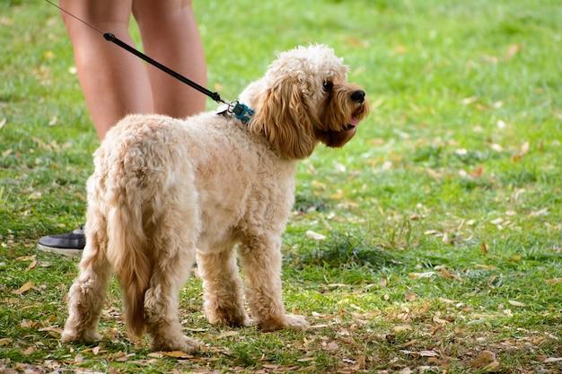 Close de um cachorro parado com o dono em uma paisagem verde