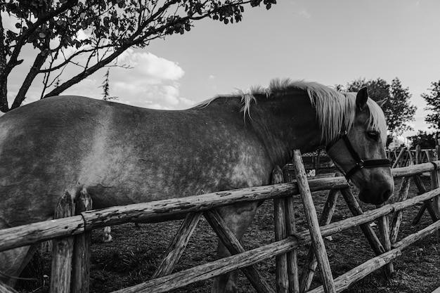 Close de um cavalo ao lado de uma cerca de madeira em uma fazenda em preto e branco