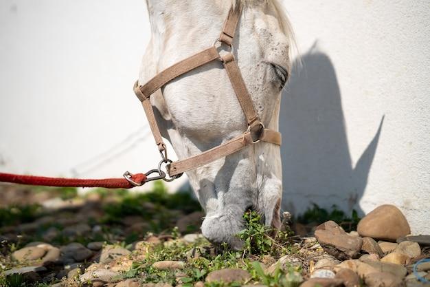Close de um cavalo com freio pastando ao lado de uma parede branca