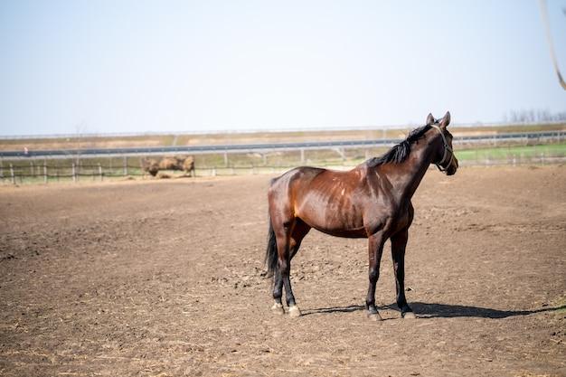 Close de um cavalo marrom parado em um curral em um dia ensolarado