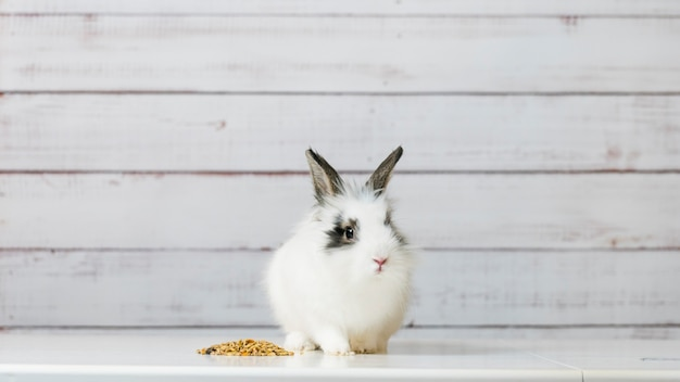 Close de um coelhinho fofo comendo uma mistura de comida seca de roedores