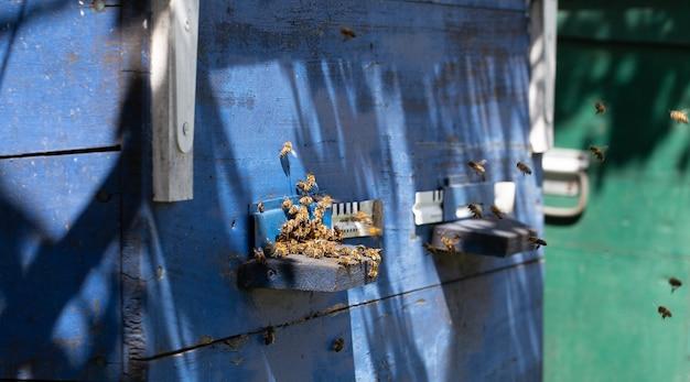 Close de um enxame de abelhas em uma colmeia de madeira em um apiário