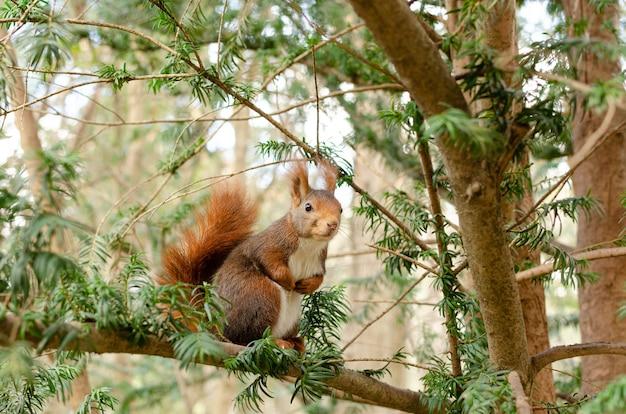 Close de um esquilo sentado em um galho de árvore com árvores