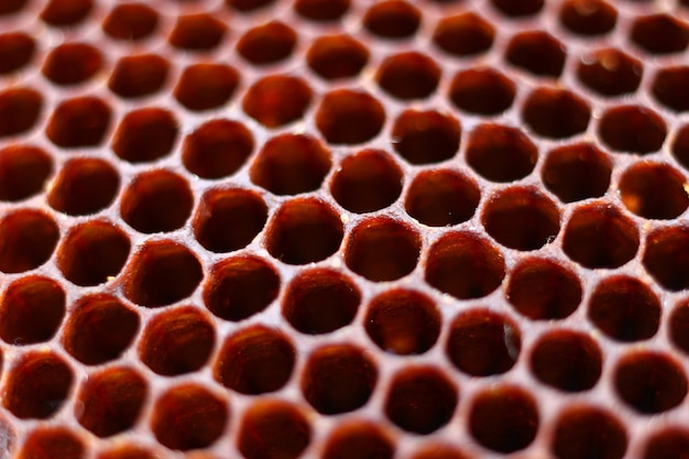 Close de um favo de mel de abelha escura
