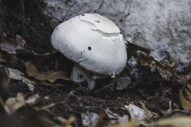 Close de um fungo branco crescendo no chão de uma floresta
