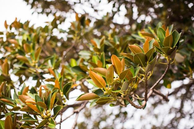 Close de um galho de árvore com folhas verdes
