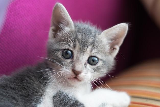 Close de um gatinho fofo surpreso e fofo