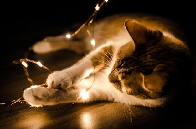 Close de um gato brincando com uma série de luz laranja no escuro
