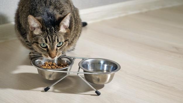 Close de um gato comendo comida seca em uma tigela