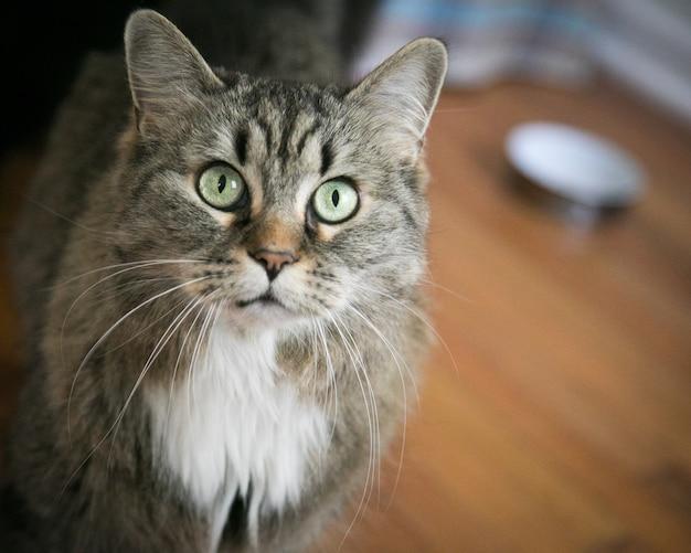 Close de um gato doméstico surpreso no chão sob as luzes