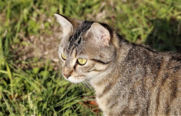 Close de um gato listrado marrom em um campo sob a luz do sol durante o dia com um fundo desfocado