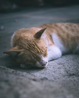 Close de um gato malhado deitado na superfície de concreto