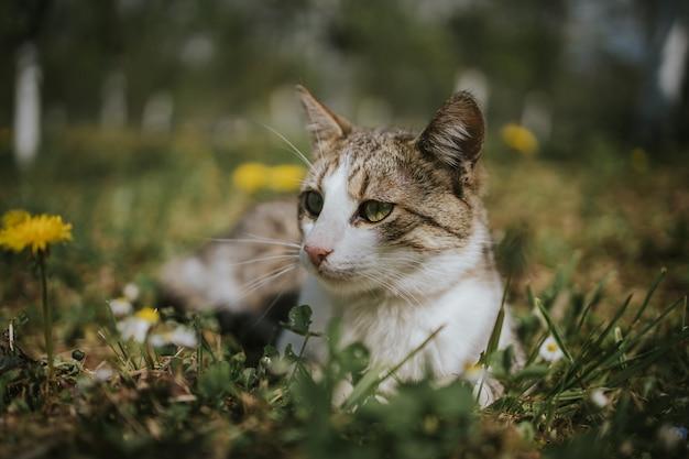 Close de um gato no campo com dentes-de-leão