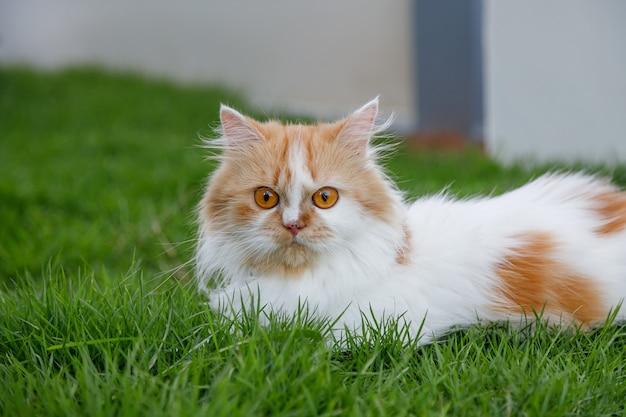 Close de um gato peludo fofo sentado na grama
