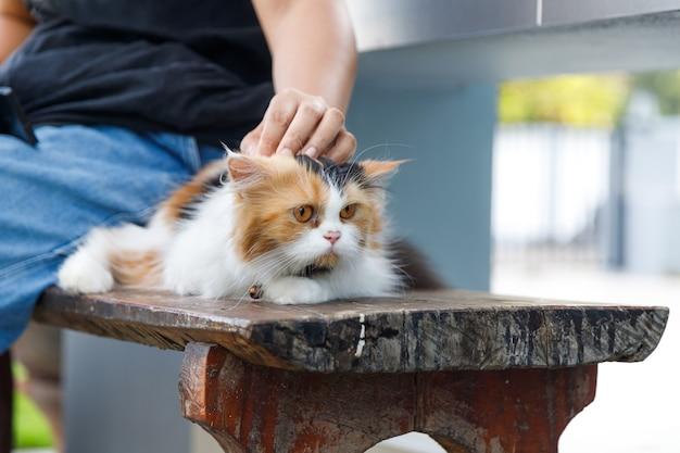 Close de um gato persa sendo acariciado