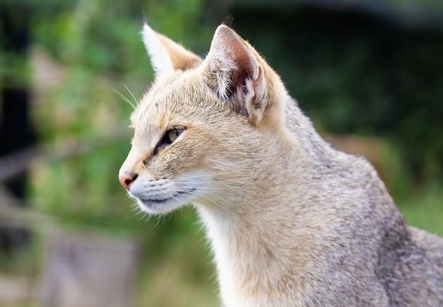 Close de um gato ruivo em um campo sob a luz do sol com uma configuração desfocada