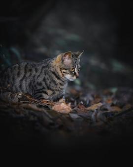 Close de um gato selvagem raro em zhangjiajie, china