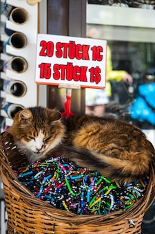Close de um gato tricolor dormindo pacificamente em uma cesta com pulseiras vendidas em uma loja de souvenirs