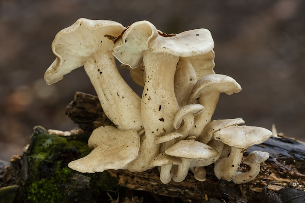 Close de um grupo de cogumelos estranhos cultivados em um tronco de árvore coberto de musgo