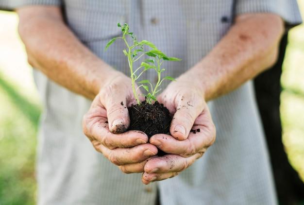Close de um homem segurando uma planta pequena