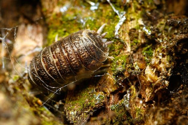 Close de um inseto no chão da floresta