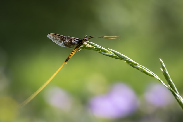 Close de um inseto sentado na planta