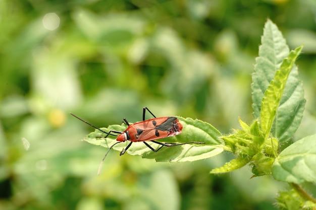 Close de um inseto vermelho e preto sentado em uma folha em um cenário desfocado