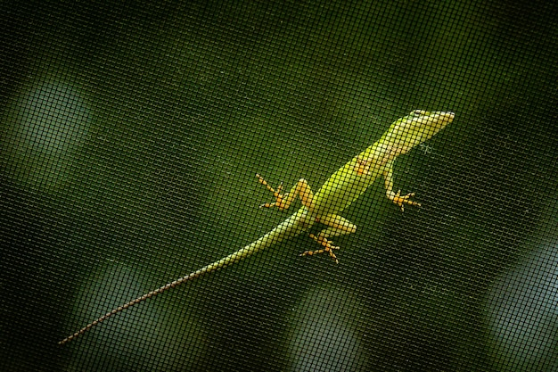 Close de um lagarto verde em uma rede de metal