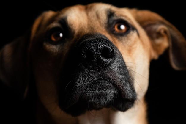 Close de um lindo cachorro doméstico marrom a uma distância negra