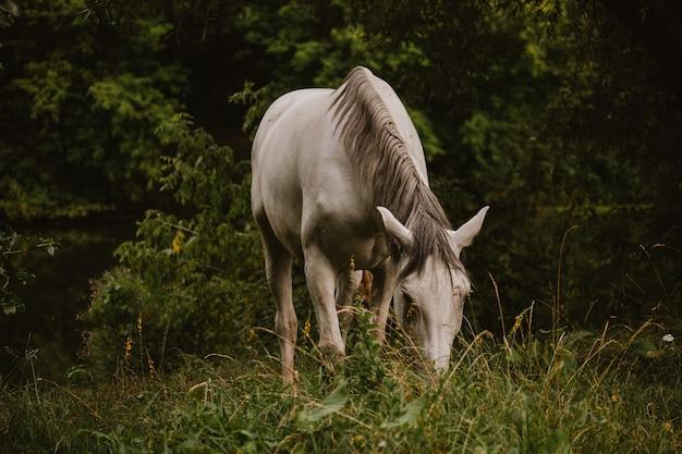 Close de um lindo cavalo branco em um campo gramado com árvores no