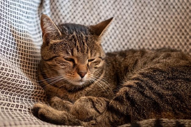 Close de um lindo gato cinza deitado na rede