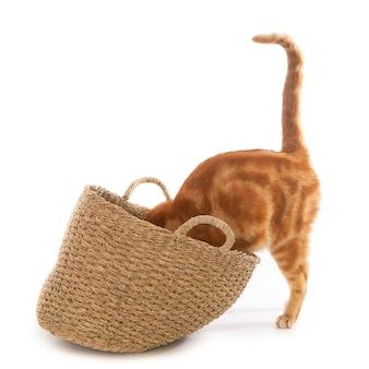 Close de um lindo gato doméstico olhando curiosamente para uma cesta de tecido com uma superfície branca
