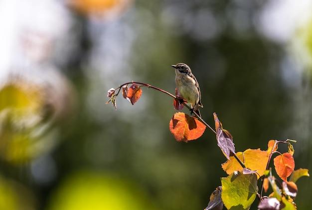 Close de um lindo passarinho no galho de uma árvore sob a luz do sol