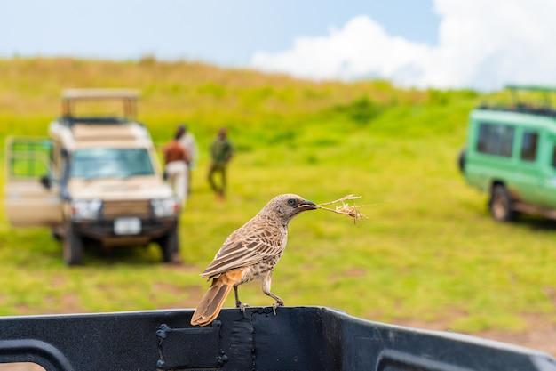 Close de um lindo pássaro sentado em uma picape